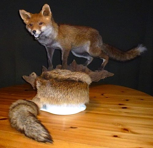 Rotfuchs Trappermütze mit Schweifen - Red Fox Fur Trapper Hat Fox Tails - Uschanka, Tschapka, Schapka